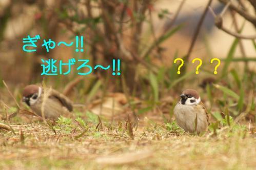 040_20101202194152.jpg