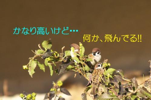 040_20101204222319.jpg