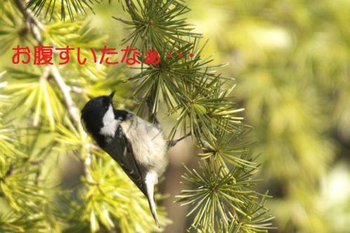 040_20110118214104.jpg