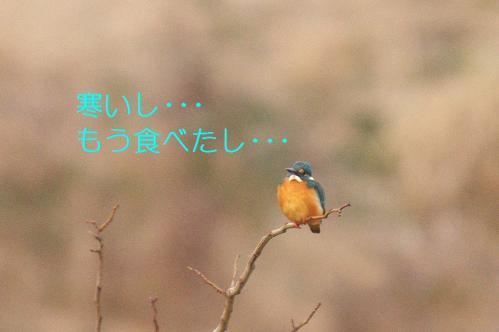 040_20110123203842.jpg