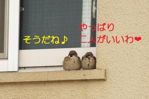 040_20110131211628.jpg