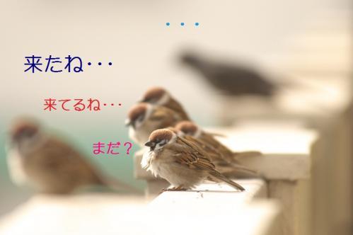 040_20110205220700.jpg