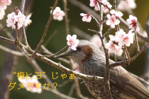 040_20110311010845.jpg