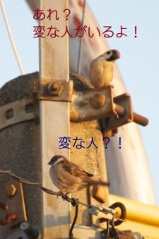 040_20110315205649.jpg