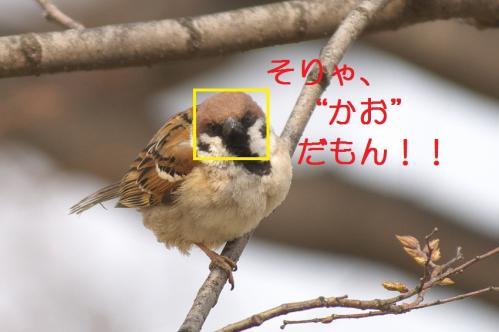 040_20110317231526.jpg