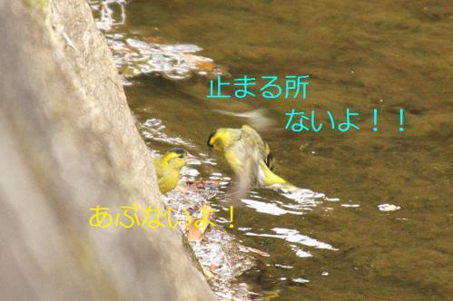 040_20110415015653.jpg