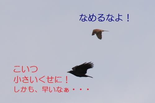 040_20110415043111.jpg