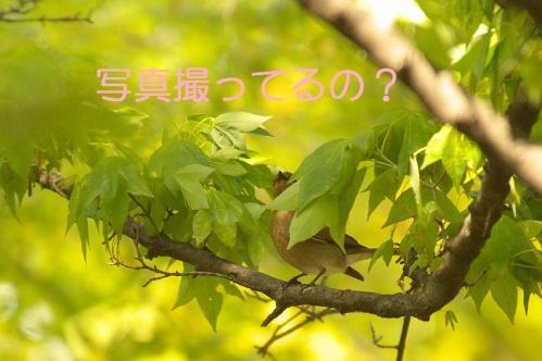 040_20110504205923.jpg