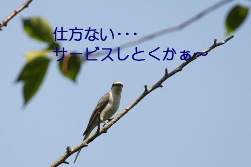 040_20110505204033.jpg