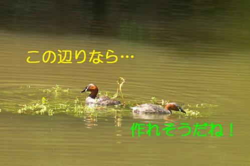 040_20110531202129.jpg