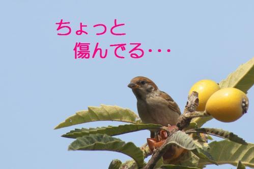 040_20110705202731.jpg