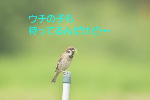 040_20110731194702.jpg