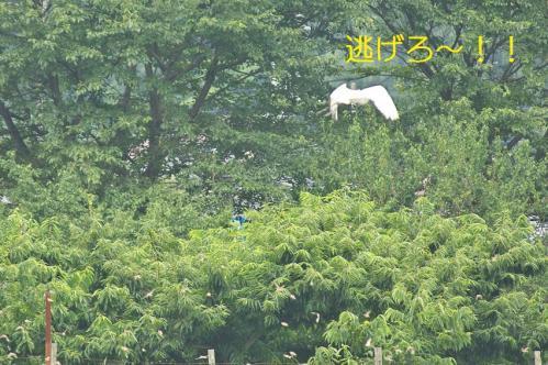 040_20110806212057.jpg