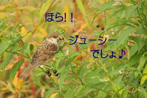 040_20110808211644.jpg