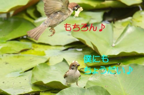 040_20110829224800.jpg