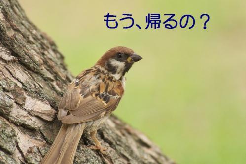 040_20110830214142.jpg