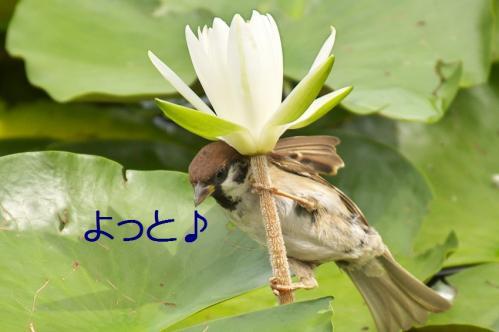 040_20110831213050.jpg
