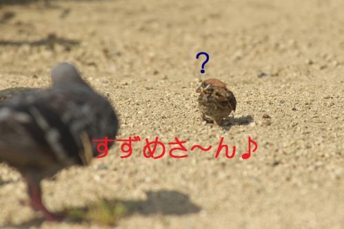 040_20110930021908.jpg