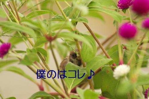 040_20111002232308.jpg