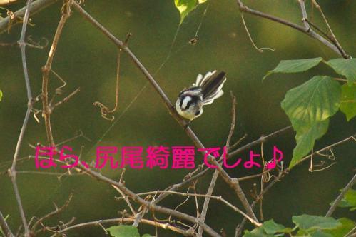040_20111005213435.jpg