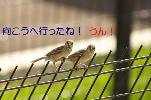 040_20111006190549.jpg