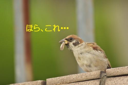040_20111007221106.jpg