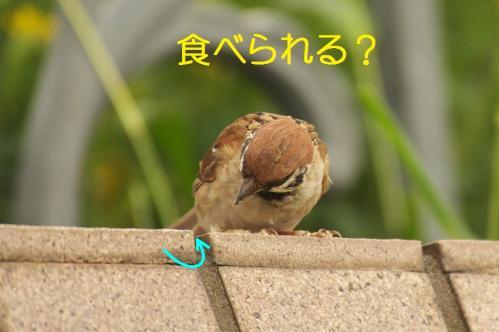 040_20111009223708.jpg
