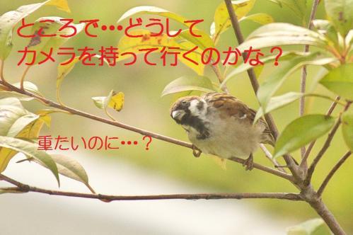 040_20111016185034.jpg