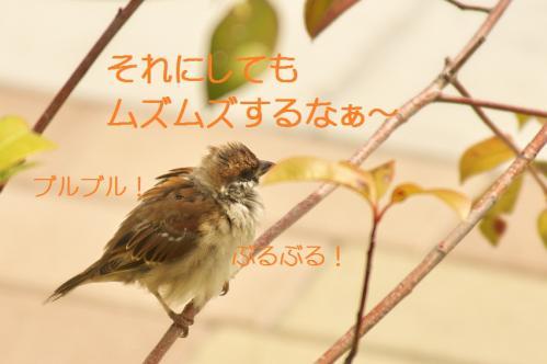 040_20111019222126.jpg