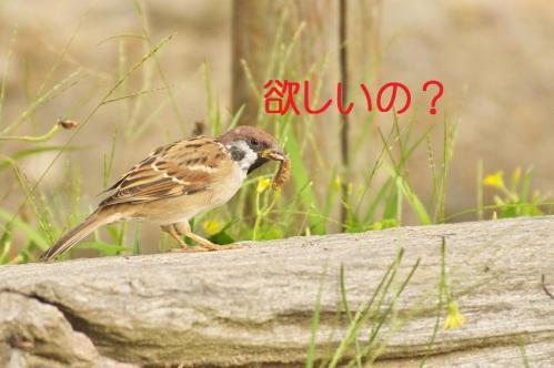 040_20111020220415.jpg