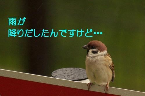 040_20111022182939.jpg
