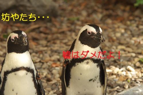 040_20111024220115.jpg