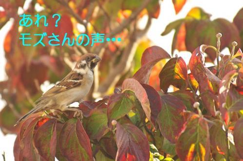 040_20111031213608.jpg