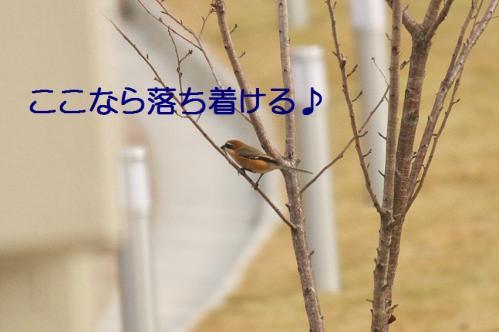 040_20111227205924.jpg