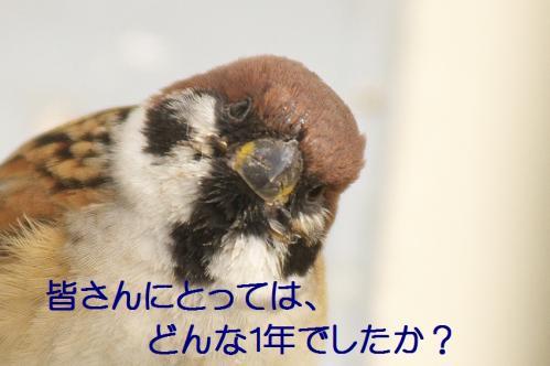 040_20111230192617.jpg