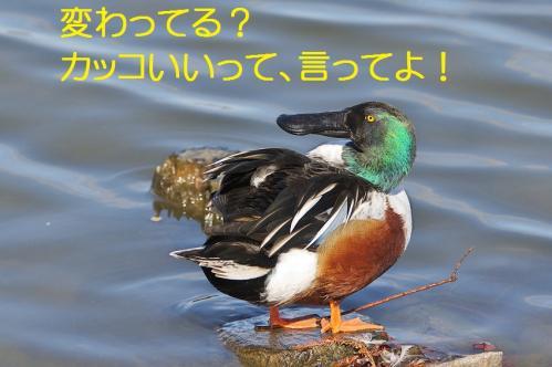 040_20120125231733.jpg
