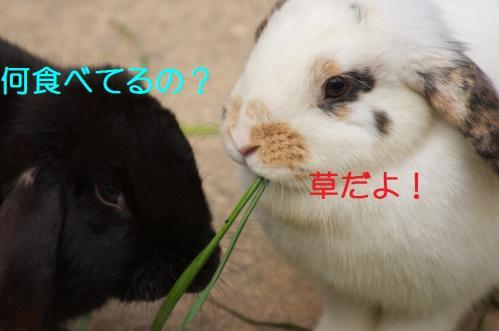 040_20120130221454.jpg