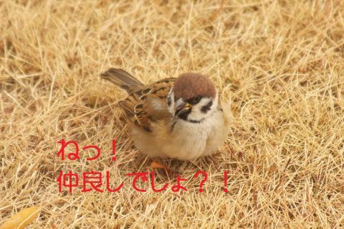 040_20120131202518.jpg