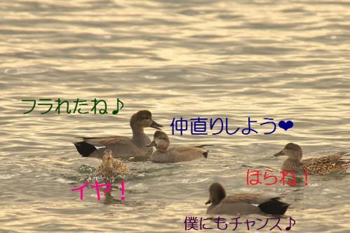 040_20120205205912.jpg