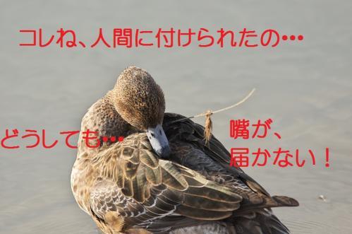 040_20120414204437.jpg