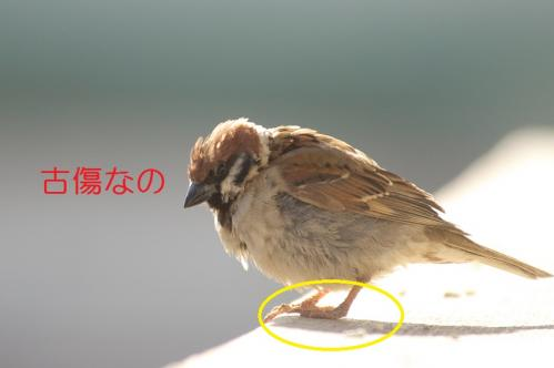 045_20110131211627.jpg
