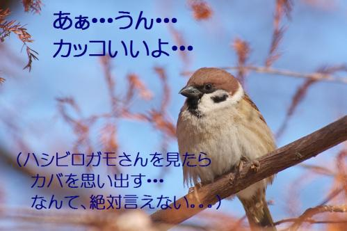 045_20120125231732.jpg