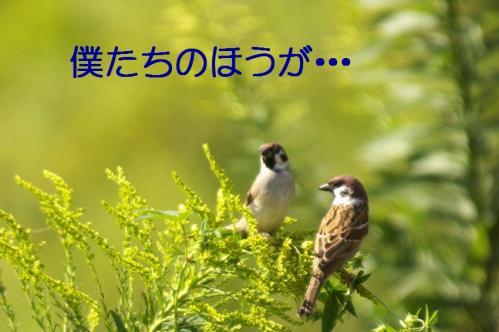 04_20101013231634.jpg
