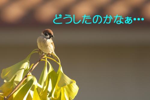 050_20101130191349.jpg