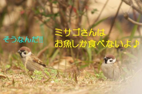 050_20101202194151.jpg