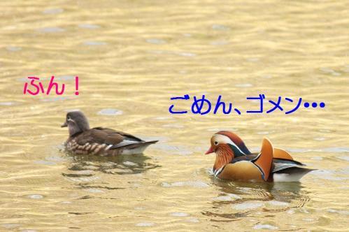 050_20101219200044.jpg