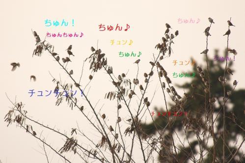 050_20110123203842.jpg