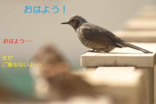050_20110205220659.jpg
