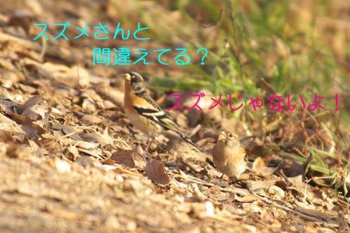050_20110209221442.jpg