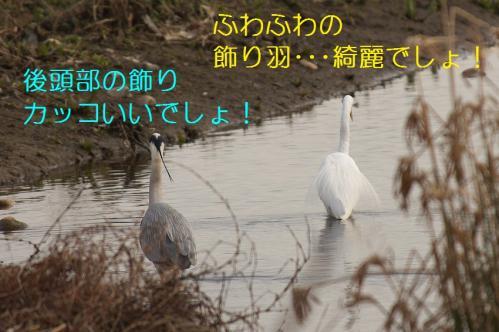 050_20110322002414.jpg